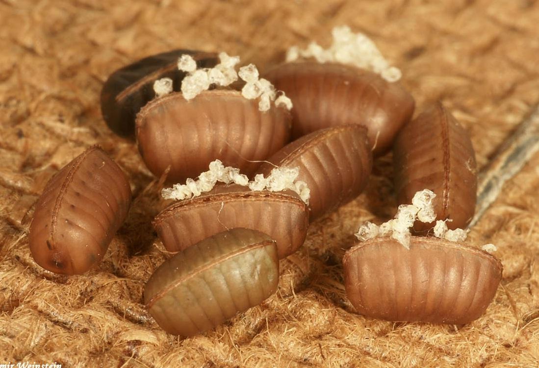 Control de plagas tratamientos y como eliminar cucarachas for Como eliminar cucarachas del desague