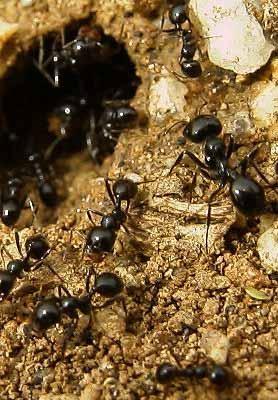 Control de plagas tratamientos y como eliminar hormigas m laga - Casa de hormigas ...