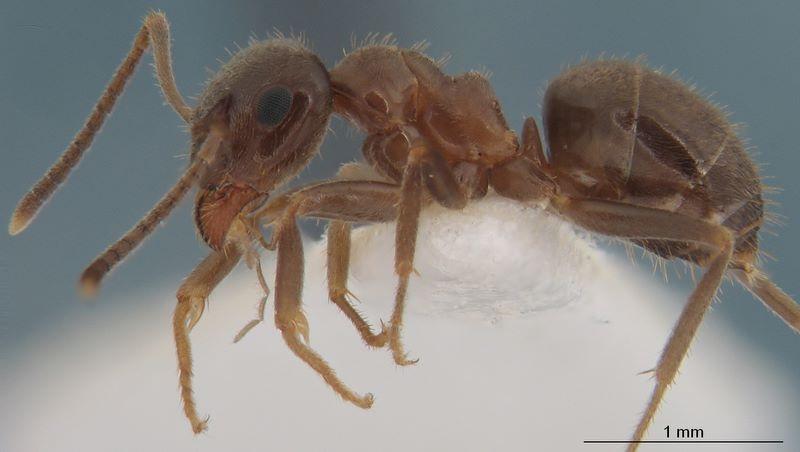 Control de plagas, tratamientos y como eliminar hormigas, Málaga